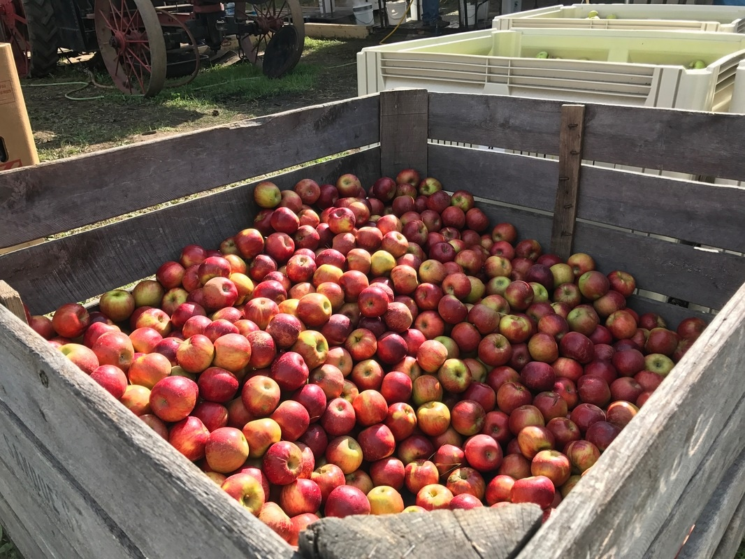 apple harvest festival coupons 2019